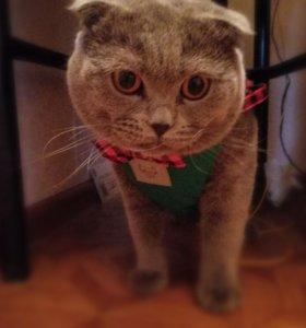Котик на вязку.