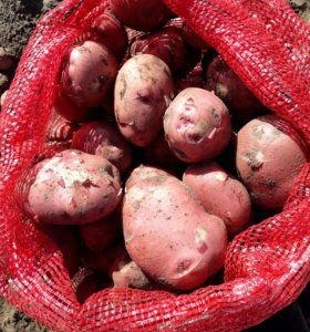 Картофель домашний деревенский