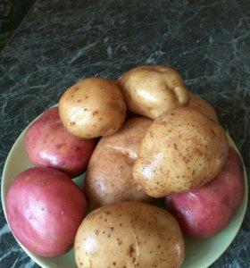 Продам картофель недорого