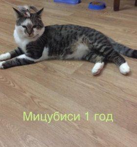 Фирменный котик ищет дом