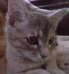 Котята от домашней кошки с доставкой в добрые руки