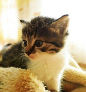 Котёнок (М)