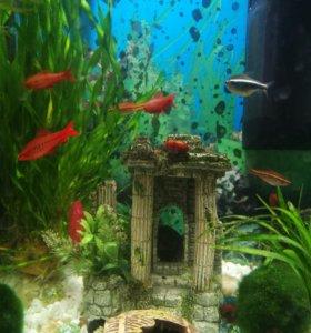 Аквариум на 30 литров, с рыбками
