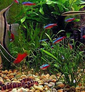 Аквариумные рыбки, улитки и креветки