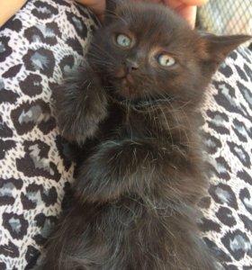 Ласковый котенок (2,5 мес) ❣️