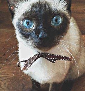 Милые котята 🐱 😍😊