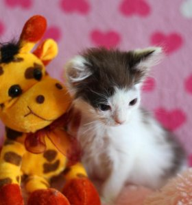 Котенок Ладочка в добрые руки