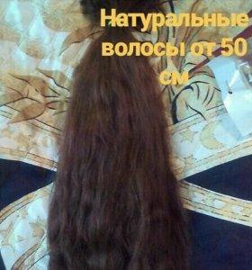 Натуральные волосы от 50см