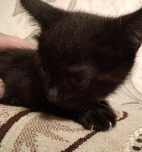 Кошечка по имени Мурка
