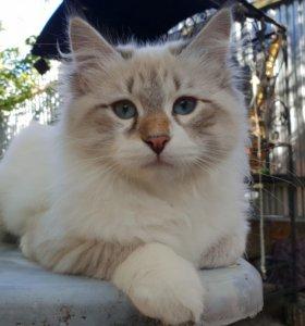 Котята 4 месяца. Красавцы!