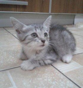 Маленький и пушистый котёнок ищет хозяина