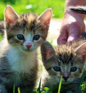 Котята в самые добрые руки!