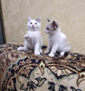 Красивые котики бесплатно