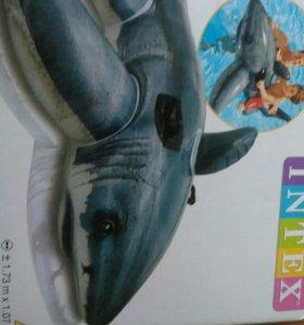 Каталка акула