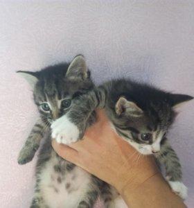 Котята в добрые руки, две кошечки и котик