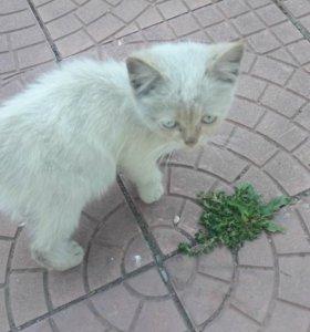 Голубоглазый котенок в добрые руки