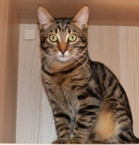 Котенок Ричард, 9 месяцев