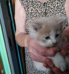 Найден котёнок ( отдам в добрые руки)