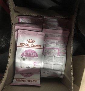 2000тыс. коробка оптом Royal Canin KITTEN