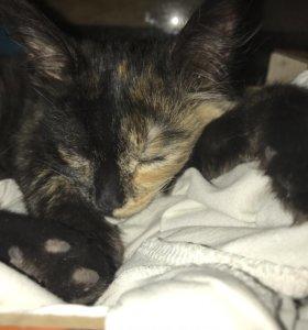 Кошечка 4 месяца