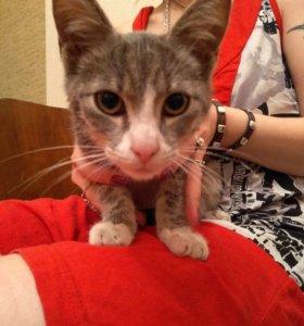 Котёнок 4 месяца в добрые руки.