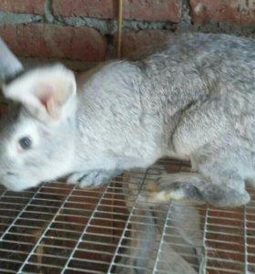 Кролики на мясо и племя