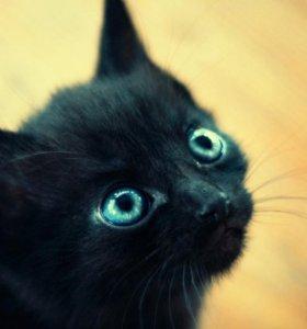 отдам котенка карликового