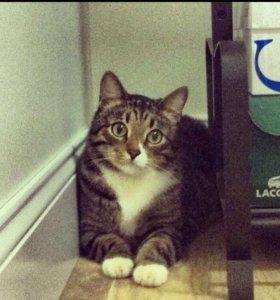 Котик Степа кот