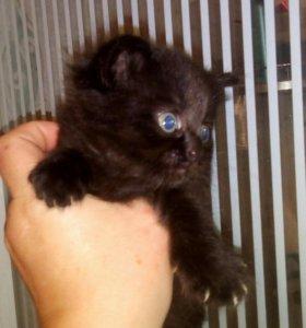 Черный кот,белая кошка