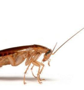 Санобработка Уничтожение Тараканы Клопы Крысы