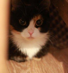 Ищет дом кошка