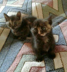 Два котёнка кошечки