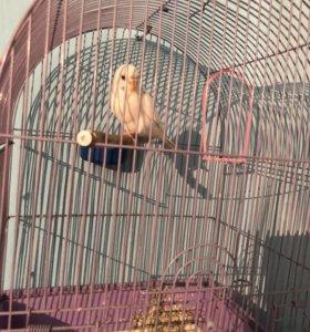 Волнистый попугайчик вместе с клеткой