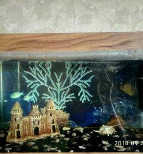 Оквариум с содержимым