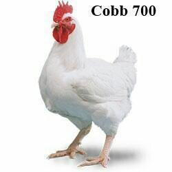 Отличный КОББ 700