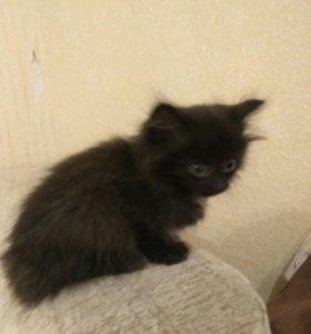 Котёнок ищет любящий дом!