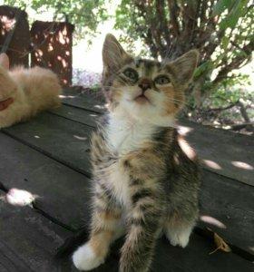 очаровательные кошечки.