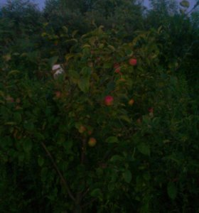 Участок, 5 сот., сельхоз (снт или днп)
