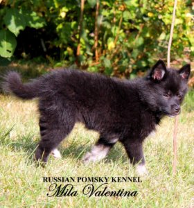 Помски - черная девочка