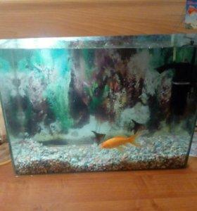 Продам аквариум с рыбками.