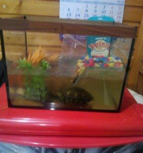 Аквариум и черепаха