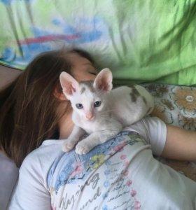 Котик, зовут Барсик