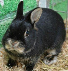 Декоративный кролик в дар
