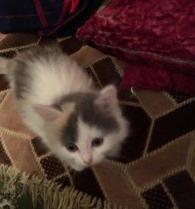 Милая кошечка ищет дом