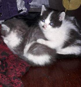 Два котёнка два мальчонка