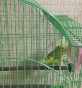 Папугай Кеша