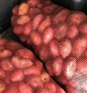 Вкусная отборная картошка