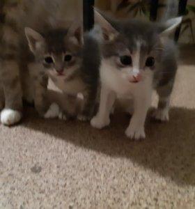 Две девочки ищут дом