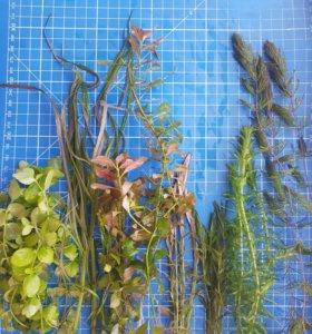 Прополка растений без СО2