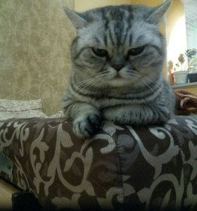 Кошка Пуся.